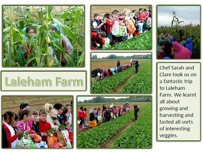 Laleham Farm Trip Photos